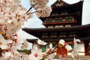 Cerezos en flor en Japón - Destino y Sabor