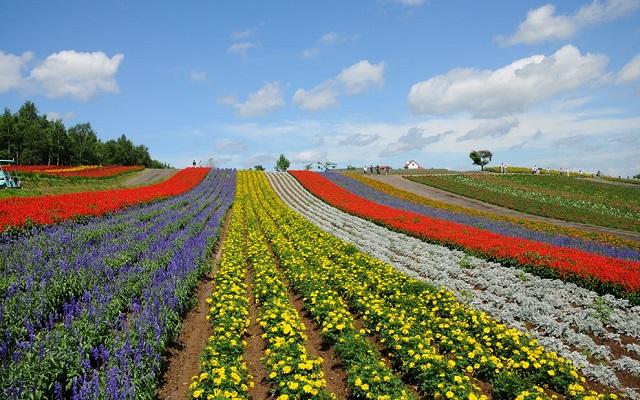 Parque Shikisai en Hokkaido - Destino y Sabor