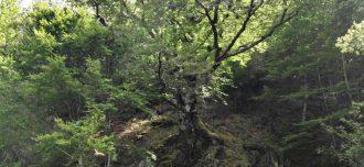 Hayedo de Montejo de la Sierra - Destino y Sabor