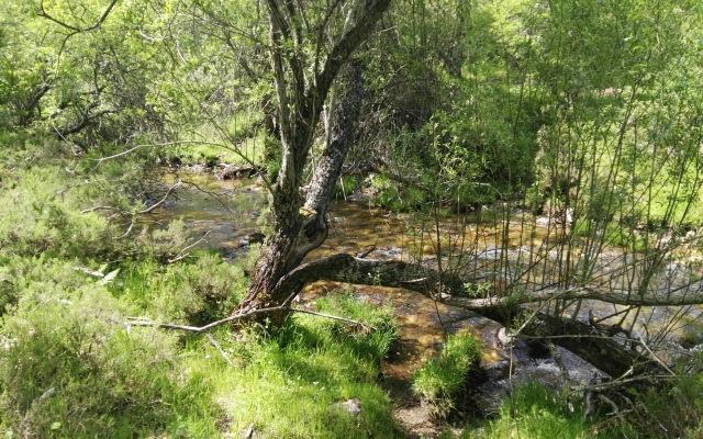 Robles del hayedo de Montejo de la Sierra - Destino y Sabor