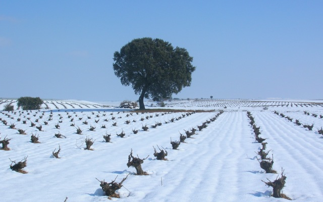 Blancas navidades en la Ruta del Vino de Rueda - Ruta del vino de Rueda
