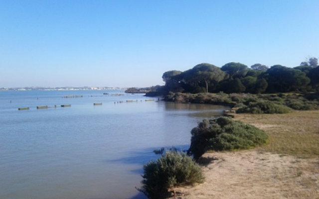 Doñana, en la margen derecha del Guadalquivir. Al fondo, Sanlúcar de Barrameda - Destino y Sabor