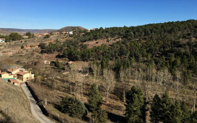 Zona de pinares próxima a Sigüenza, desde esta zona parten las rutas de senderismo - Destino y Sabor
