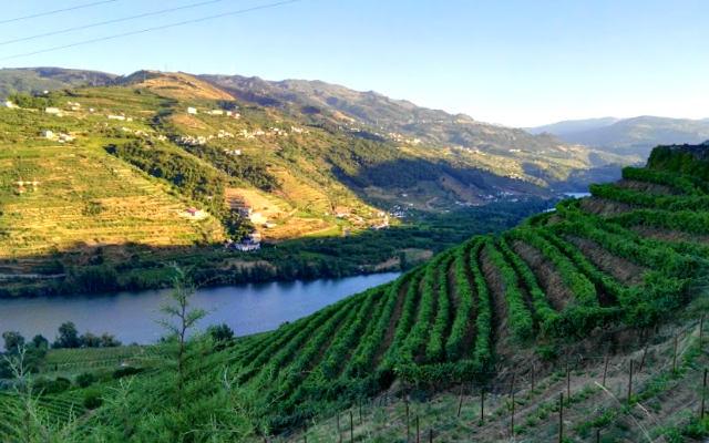 Paisajes con terrazas llenas de viñedos en el Duero portugués - Destino y Sabor