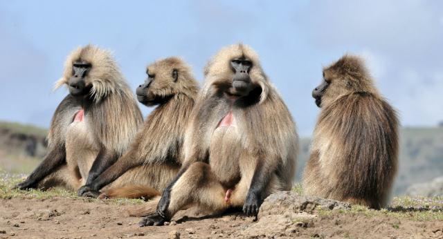 Monos del Parque Terre de Singes