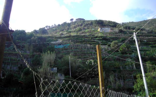 Viñedos en bancales sobre los acantilados de Cinque Terre - Destino y Sabor