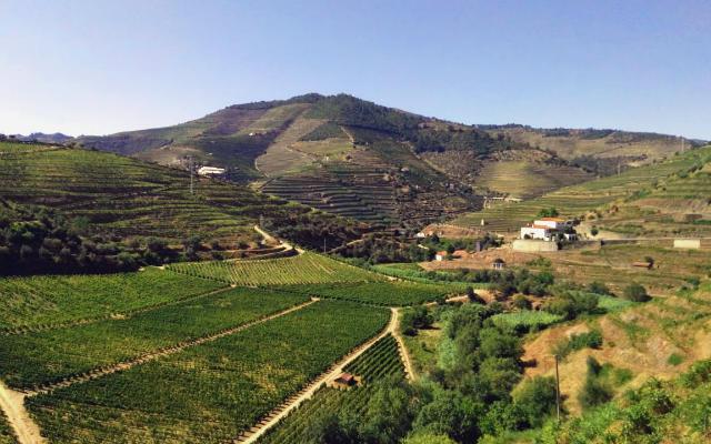 Quintas y bodegas de la zona, declarada Patrimonio de la Humanidad - Destino y Sabor