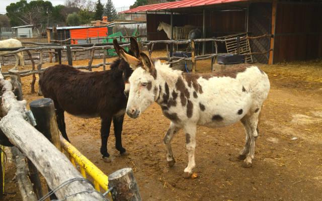 Amigos de los Burros en Burrolandia