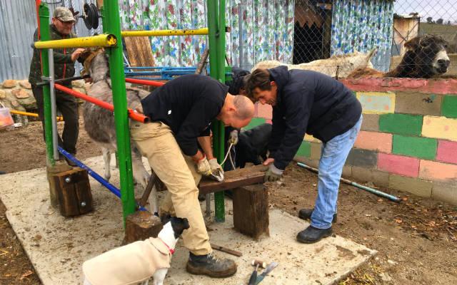 Herraje de los burros y caballos en Burrolandia - Destino y Sabor