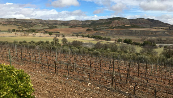 Viñedos en torno a la Bodega de Pago Calzadillas - Destino y Sabor