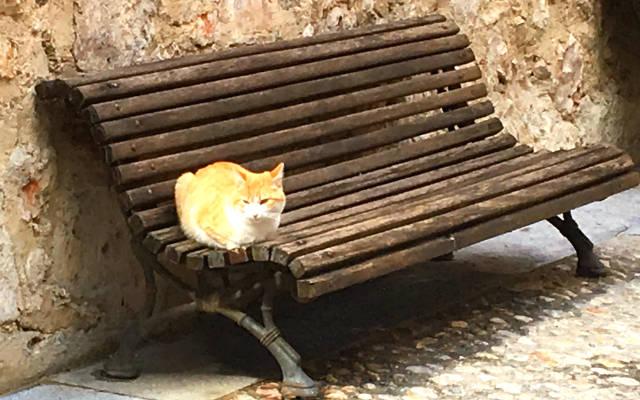 Gato al sol en Cuenca - Destino y Sabor