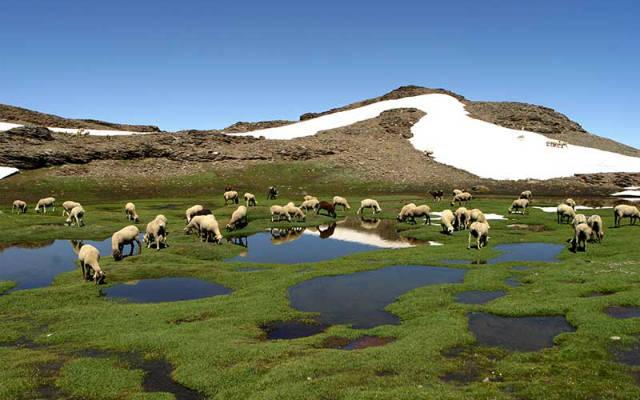 Lagunas y pastizales en Sierra Nevada - Imagen de SierraNevada