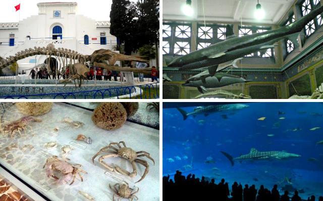 Museo Oceanográfico de Carthago - Destino y Sabor