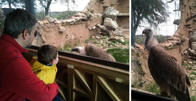 Buitres leonados de la reserva de la Fauna José Peñas - Destino y Sabor