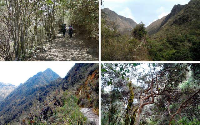 Diferentes tipos de bosques a diferentes altitudes por el Camino del Inca - Destino y Sabor