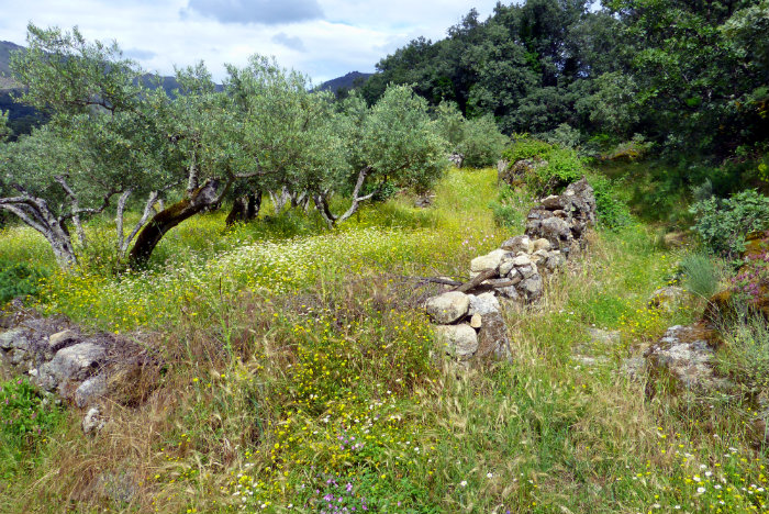 Naturaleza exuberante en las rutas a caballo por la Sierra de Gata