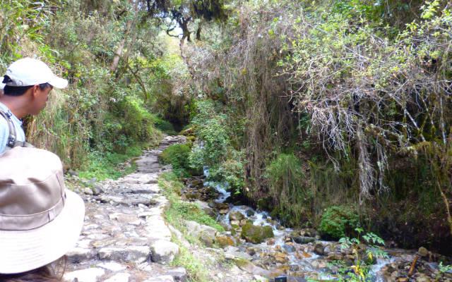 Selva de montaña durante la subida - Destino y Sabor