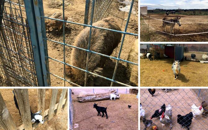 Animales reserva de la Fauna José Peñas - Destino y Sabor