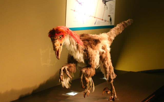 Deinonychus, la primera evolución de los dinosaurios a las aves - Destino y Sabor