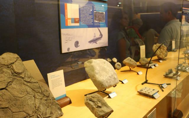 Restos de ignitas encontradas en Asturias - Destino y Sabor