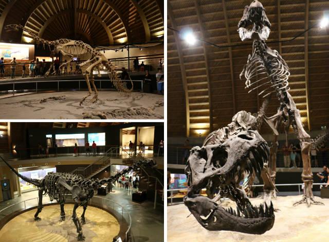 Esqueletos principales del Museo del Jurásico - Destino y Sabor