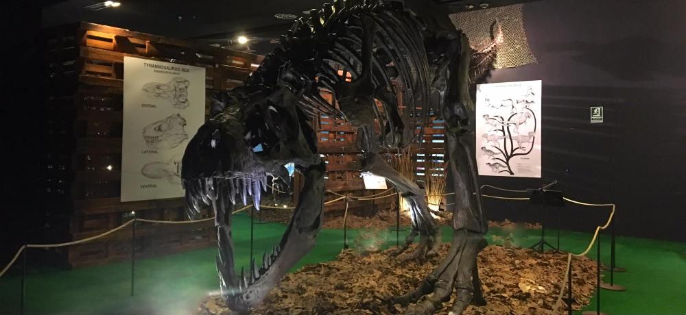 Tiranosaurio Rex en posición de caza - Destino y Sabor