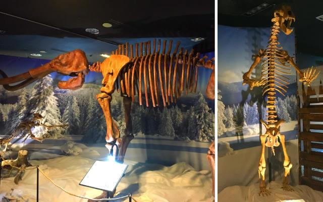 Dinopétrea en Xanadú