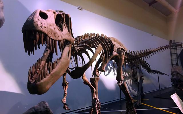 Tiranosaurio Rex en el Museo de Ciencias Naturales de Madrid - Destino y Sabor