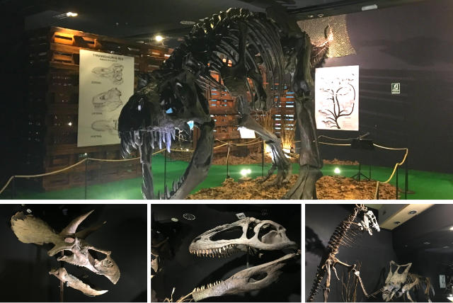 Exposición de esqueletos completos de dinosaurios - Destino y Sabor