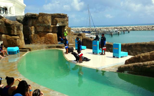 Ocean World Adventure Park - Imagen de Noticiasenn