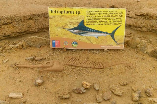 Ruta de yacimientos de Caldera de un fosil de animal marino - Imagen de Wikiloc