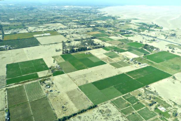 Plantaciones en el desierto - Destino y Sabor