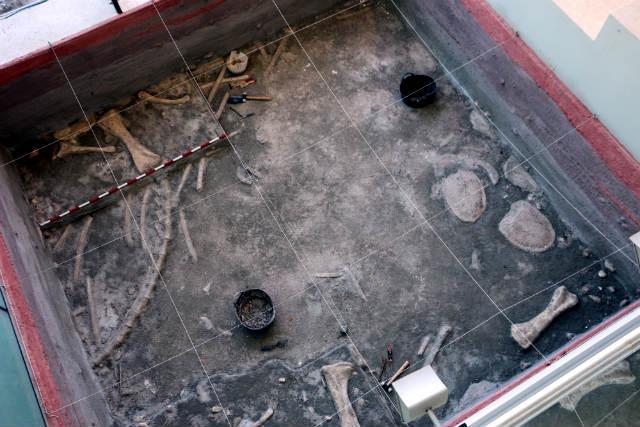 Maqueta de un yacimiento paleontológico - Destino y Sabor