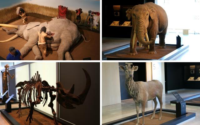 Exposición de los grandes mamíferos que habitaron España - Destino y Sabor