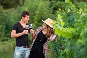 Vinos blancos DO Empordá Fuente: Campings in Girona