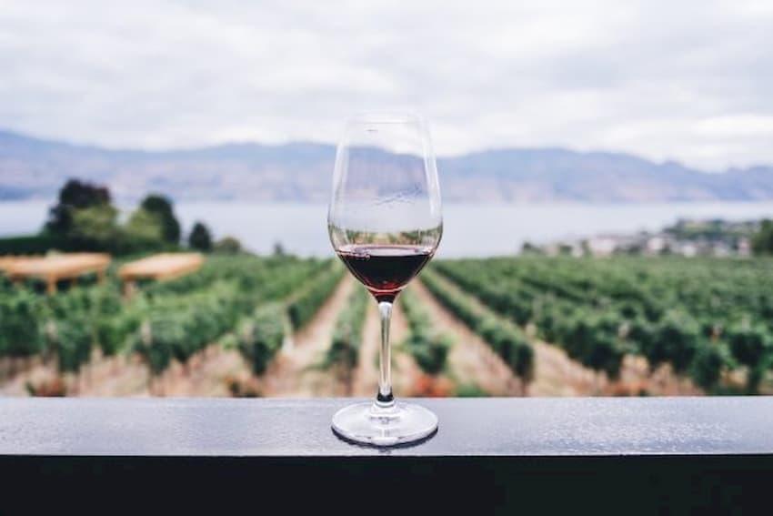 vinos tintos DO Empordá (1)