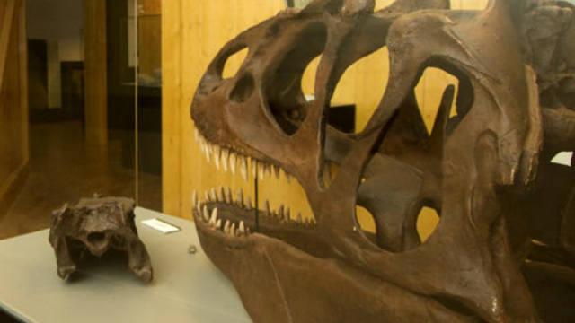 Museo paleontológico de El Barranco Perdido - Destino y Sabor
