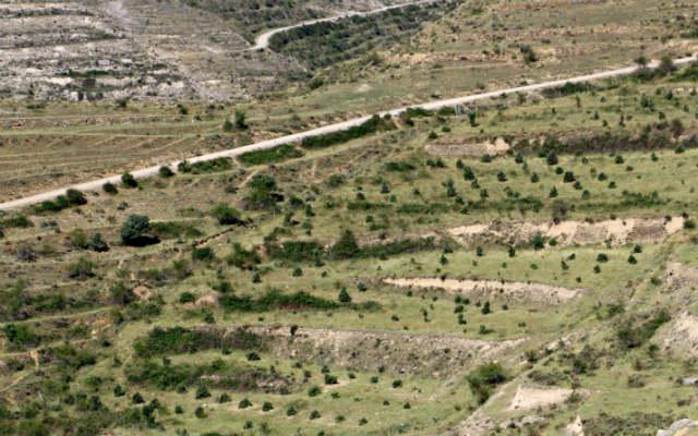 Carretera al Yacimiento del Barranco de la Canal - Destino y Sabor