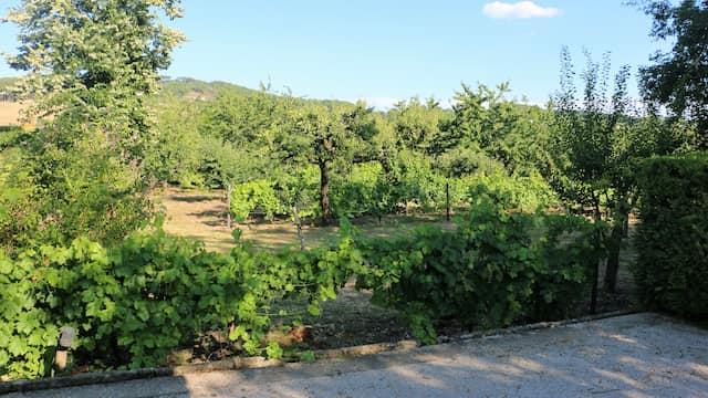 Huerto y viñedos del palacio - Destino y Sabor