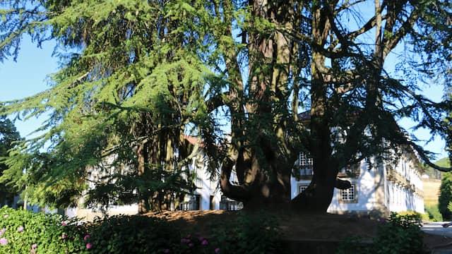 Secuoyas gigantes en los jardines del Palacio Mateus - Destino y Sabor