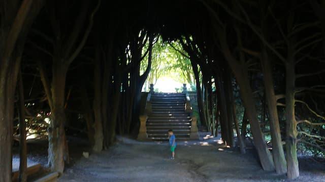 Túnel de árboles en los jardines posteriores - Destino y Sabor